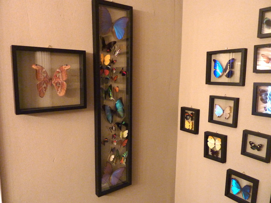 framed butterfly display examples