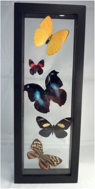 Framed Butterfly Sets For Sale