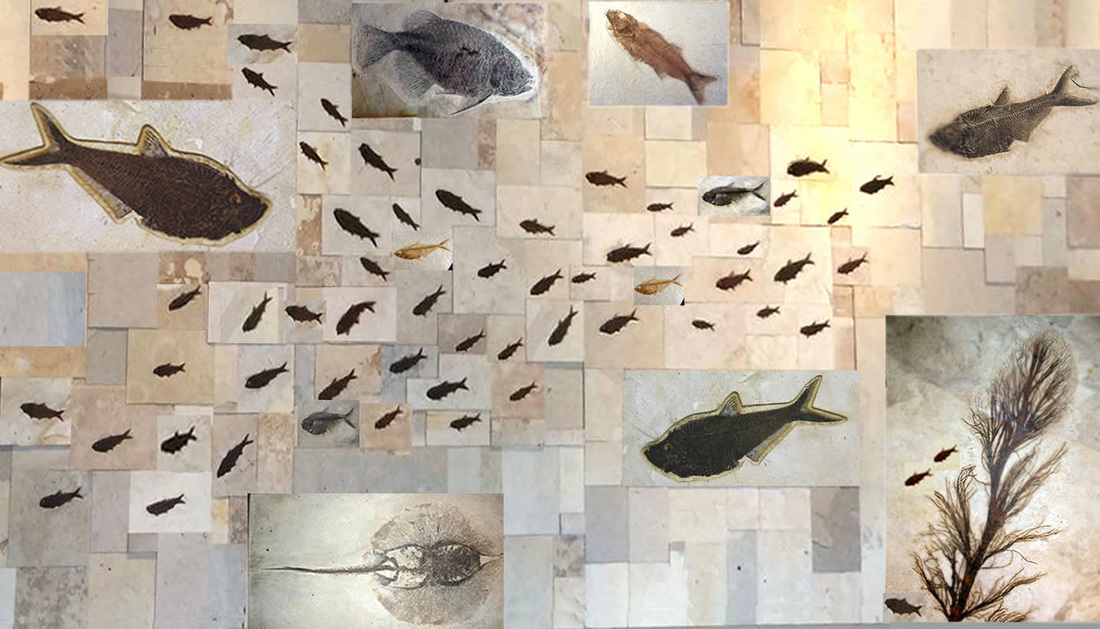 Custom Fossil Fish Murals Backsplash