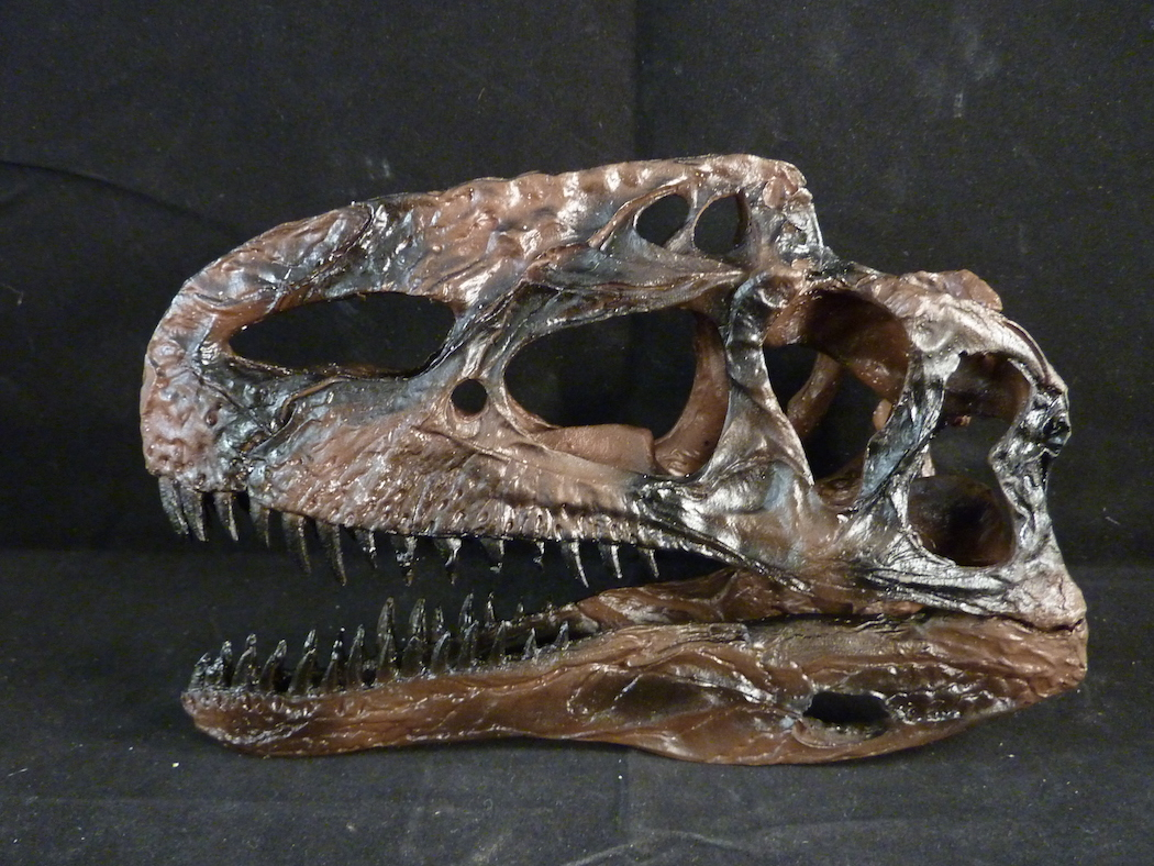 Guanlong Skull for sale