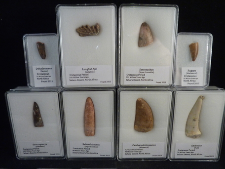 Selling dinosaur teeth