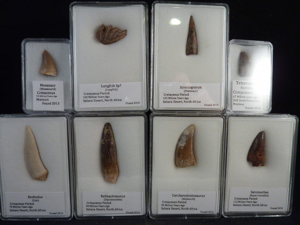 dinosaur fossils for sale