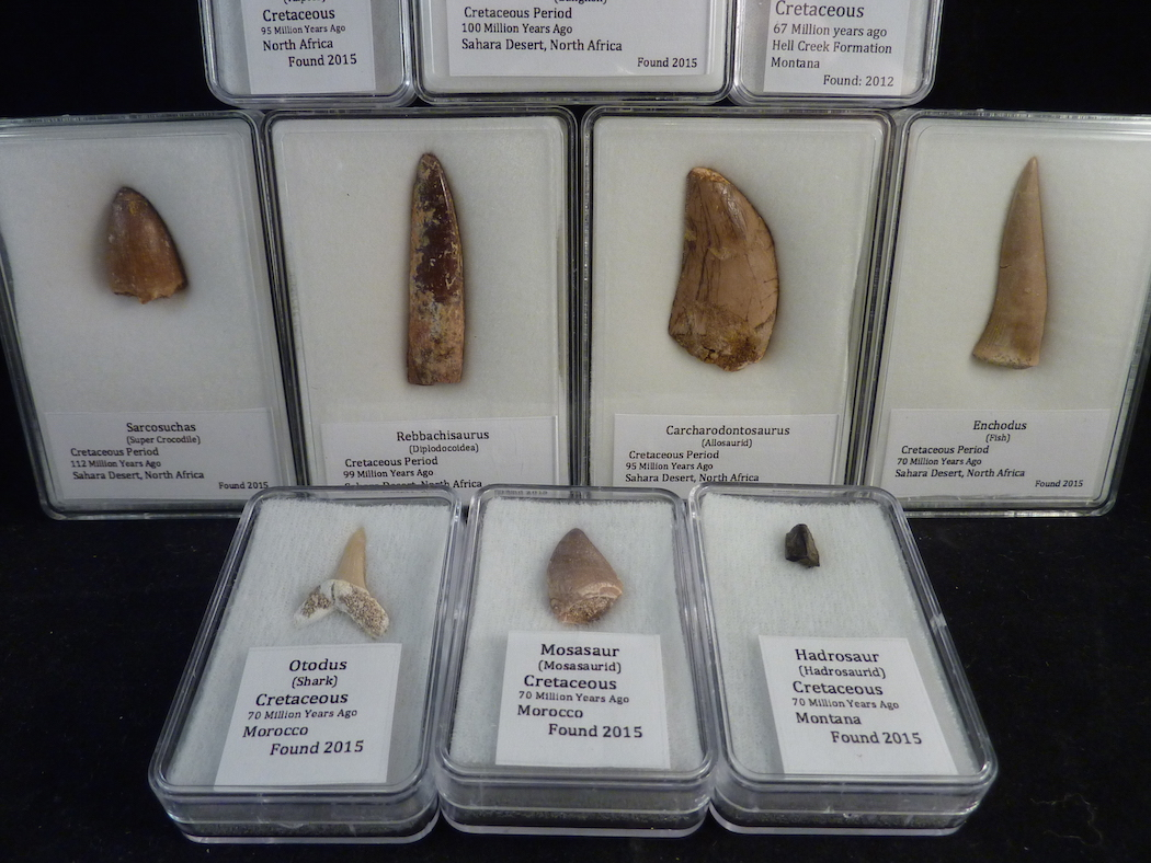 fossil teeth