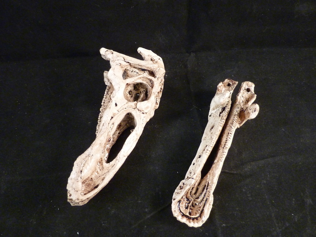 hadrosaur skull model for sale