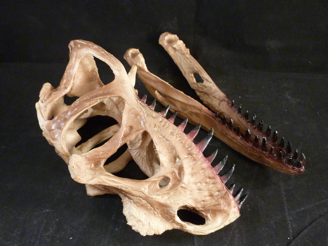 scale model ceratosaurus skull for sale