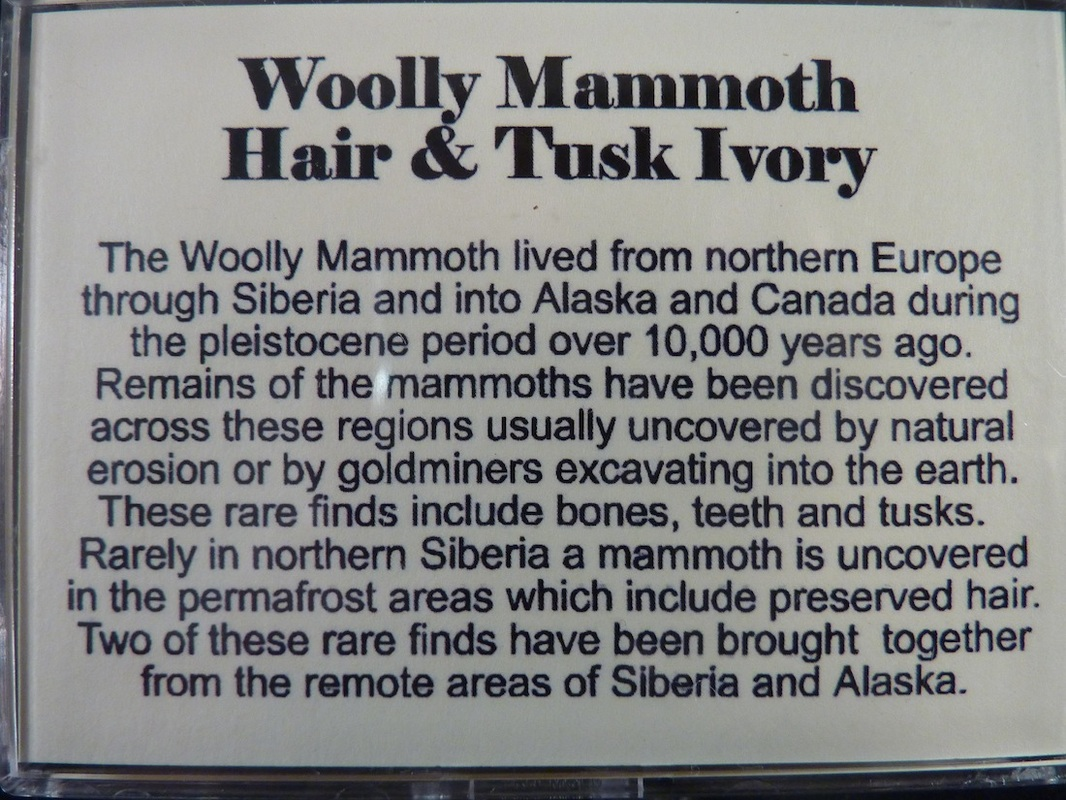 mammoth hair and tusk