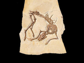 Fossil Horse